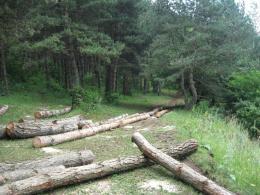 Քաղաքային բնակավայրերի սահմաններում ծառերի հատումը կիրականացվի միայն համայնքի ղեկավարի թույլտվությամբ, պահանջ կսահմանվի ծառերի հատման դեպքում ծառապատել տվյալ հողամասը